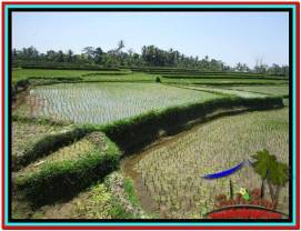 Magnificent LAND IN UBUD FOR SALE TJUB529