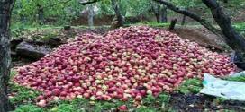 التفاح «أخطر» من الإرهاب!