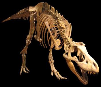 Tarbosaurus skeletal mount at the Mesa Southwest Museum.