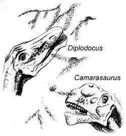 Sauropod diets