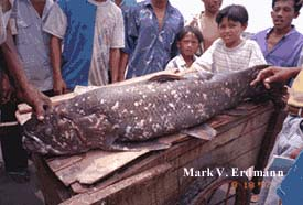 Ikan Purna ini bernama Coelcart Ba
