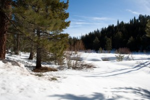 Sagehen in winter