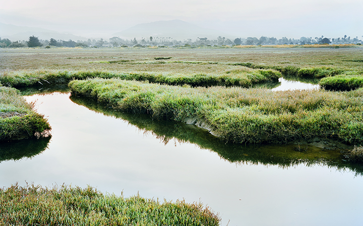 Carpinteria Salt Marsh Reserve
