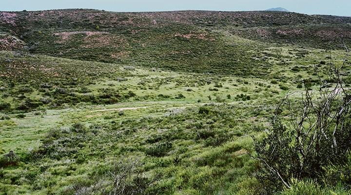 Elliott Chaparral Reserve