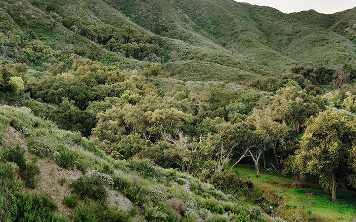 Emerson Oaks Reserve