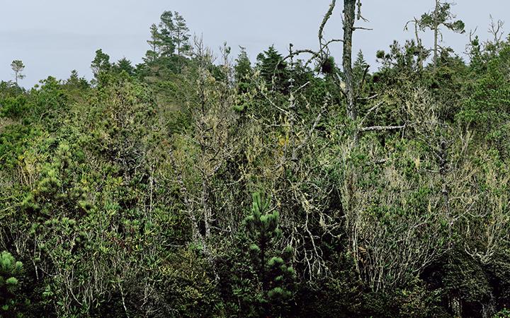Hans Jenny Pygmy Forest Reserve