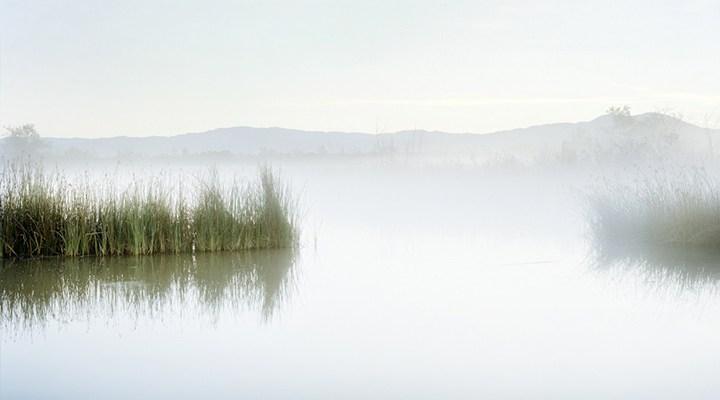 San Joaquin Marsh Reserve