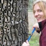 Oak Breath Reveals the Sugary Savings in Trees