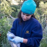 From buzz pollination to seal bones: the 2017-18 Mathias Grant awards