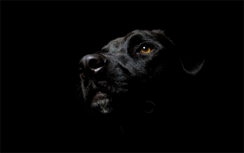 dog dark wallpaper