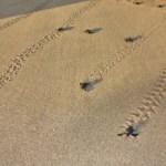 Berakhir Pekan di Pantai Ujung Genteng Sukabumi | Blog Nusa Travel