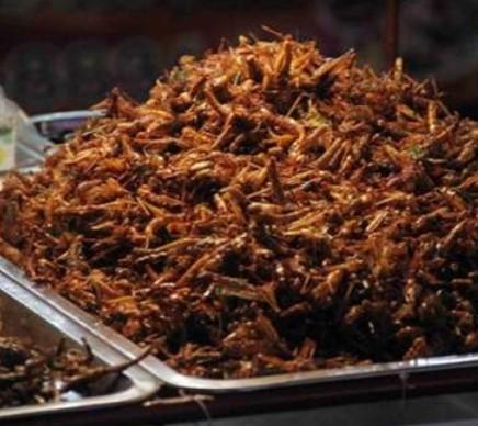 Makanan Paling Aneh di Indonesia
