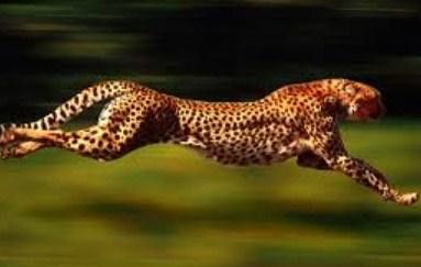 Hewan Tercepat di Dunia