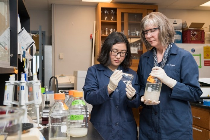 """University of Delaware Professor Kathryn Coyne (right) and doctoral student Yanfei Wang have patented a technique for embedding algicide-emitting Shewanella bacteria into gel beads. These """"bacteria bullets"""" can then be placed in mesh bags for deployment to coastal waters to stop a toxic red tide bloom."""