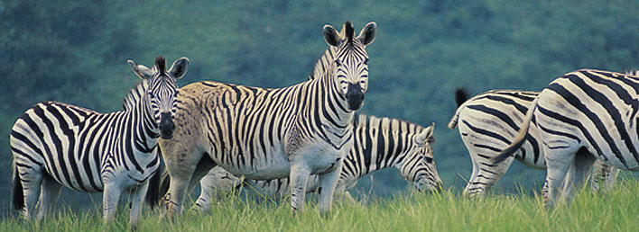 wild animal welfare ufaw