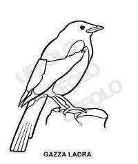 Uccelli | Uffolo