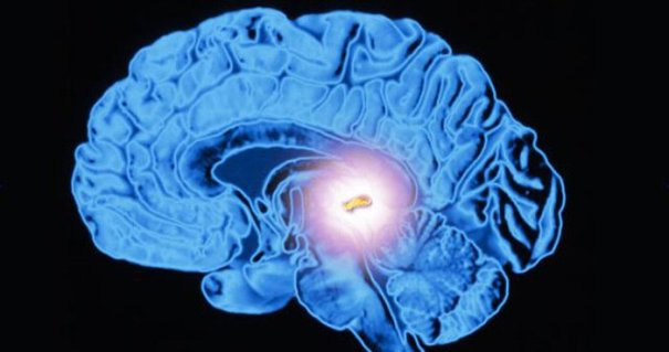 an analysis of the brain melatonin and the pineal gland There are several packages that have been developed for volume estimation such as analyze and image j this software has roi function based on manual techniques interestingly, tapp and huxley [17, 18] reported a gradual increase in the size of the pineal gland from puberty to old age in humans.