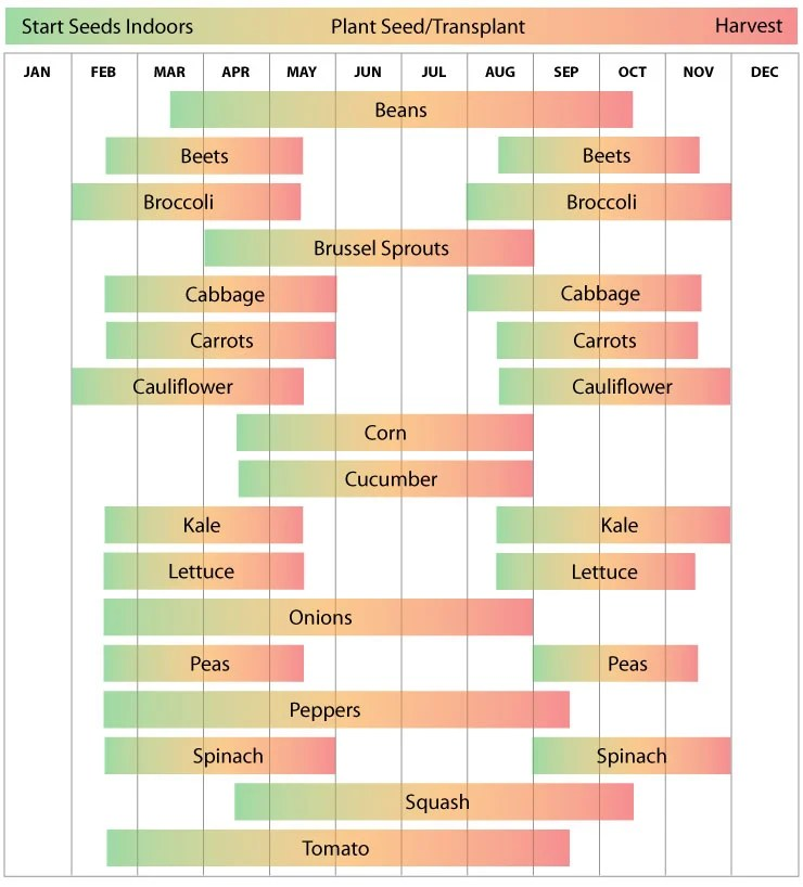 Zone 8 Planting Calendar Urban Farmer Seeds
