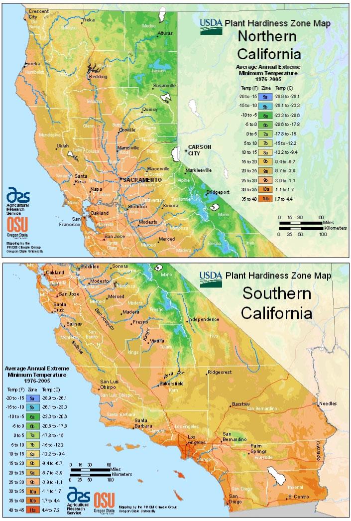 California Vegetable Planting Calendar