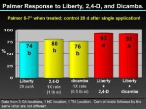 Palmer control - Liberty - 24D-Dicamba