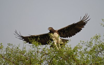 Murchison Falls National Park - birds in Uganda