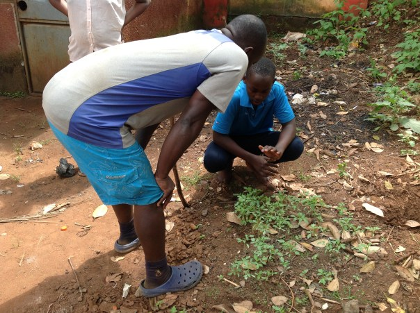 Ayub inspects a backyard nursery bed with one of his learners