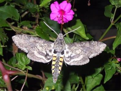 Photo by Nancy Hinkle, UGA Entomologist