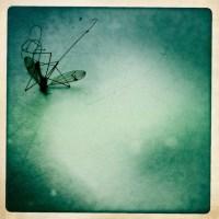 Der Tot einer Mücke