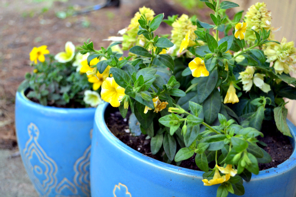 planters with new flowers
