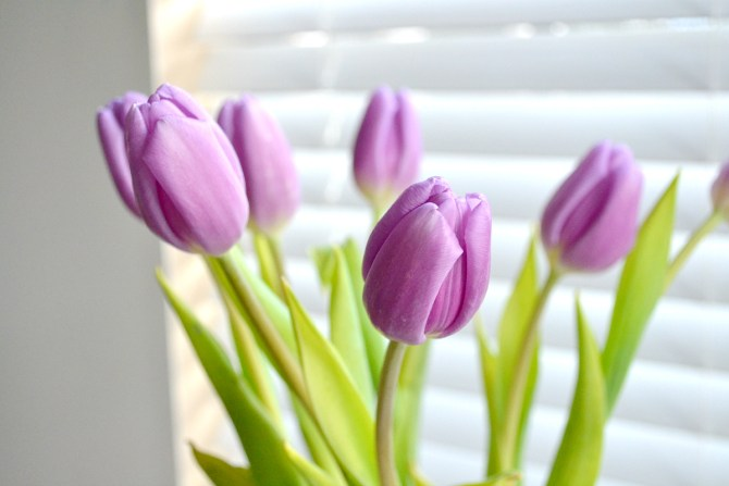 how to keep cut tulips fresh longer