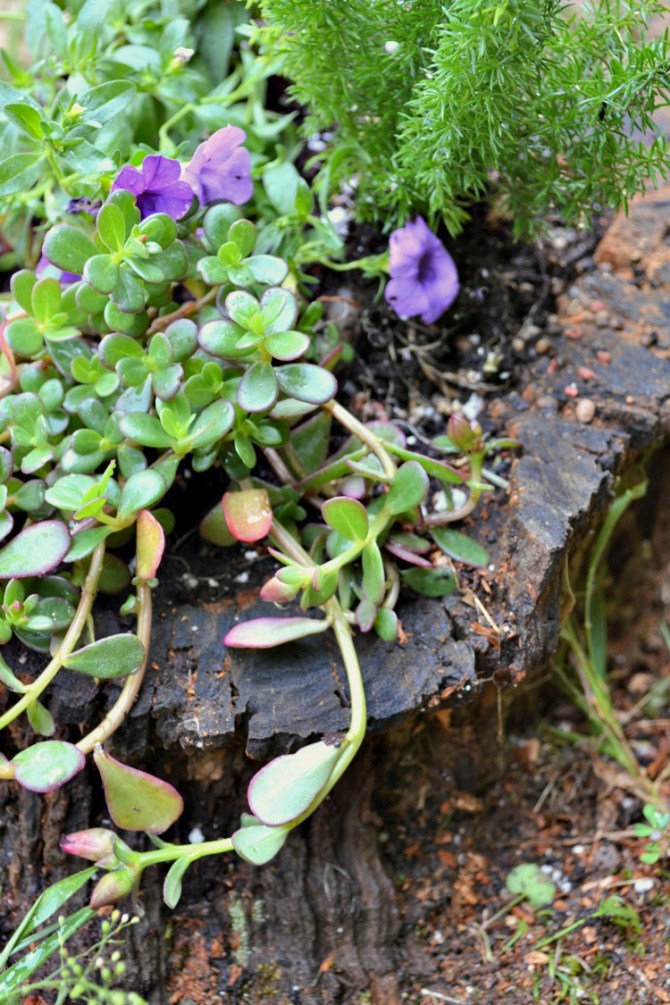 mix of plants closeup