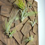 Diy Air Plant Wall Art From Scrap Wood Ugly Duckling House