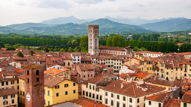 View from the Guinigi Tower in Lucca