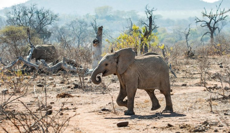 The incredible environmental damage that elephant overpopulation has caused