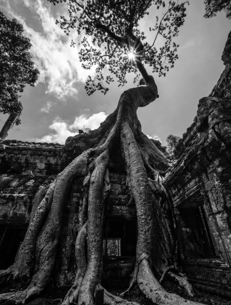 Tree overgrowing Khmer temple, Ta Prohm, Angkor, Cambodia