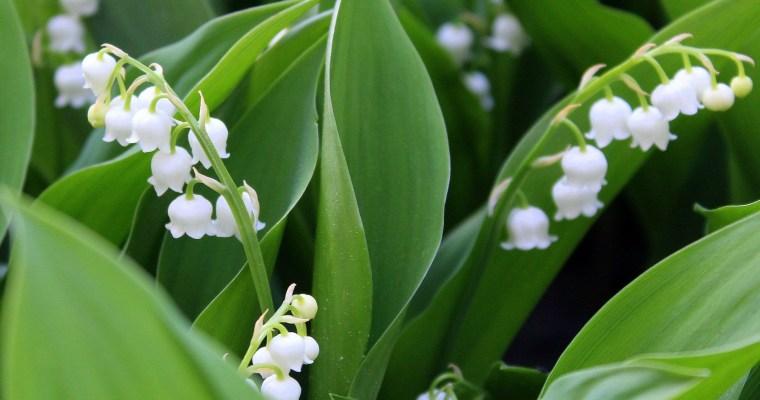 Top 10 najlepszych przepisów na wiosnę – nowalijki