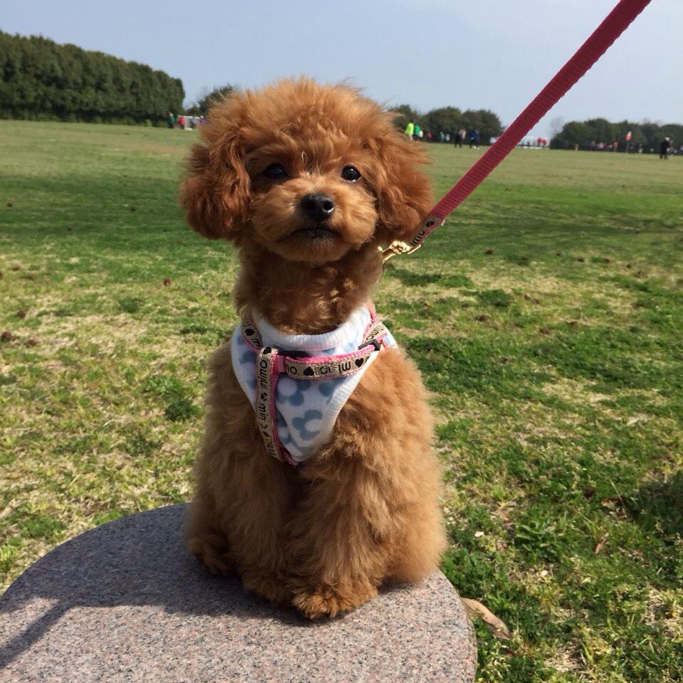 【犬連れ】夏の旅行・お出かけの必需品
