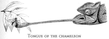No. 1623: Joel Dorman & Esther Steele