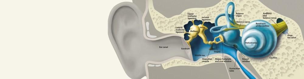 medium resolution of how we hear