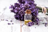 Spain Lavender Essential Oil