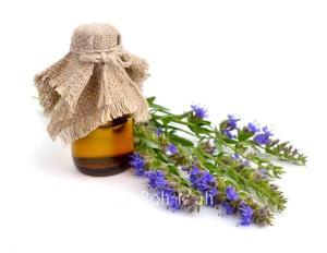 Organic Hyssop Oil