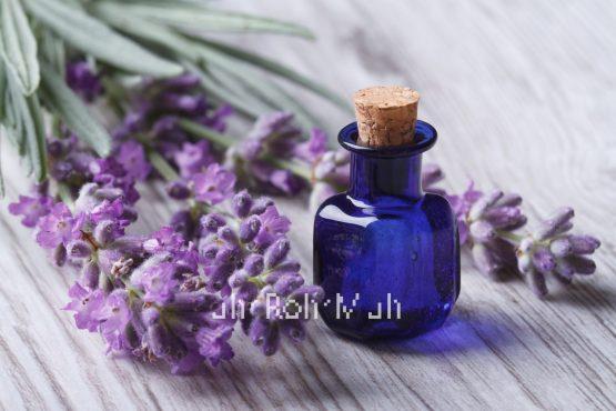 Organic Spike Lavender