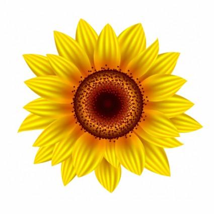 sunflower free vectors ui
