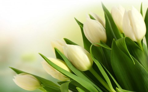 Flowers-Bokeh-Light-Tulips-White-Bouquet-Wallpaper-2560x1600