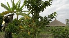 Pestizidanwendung