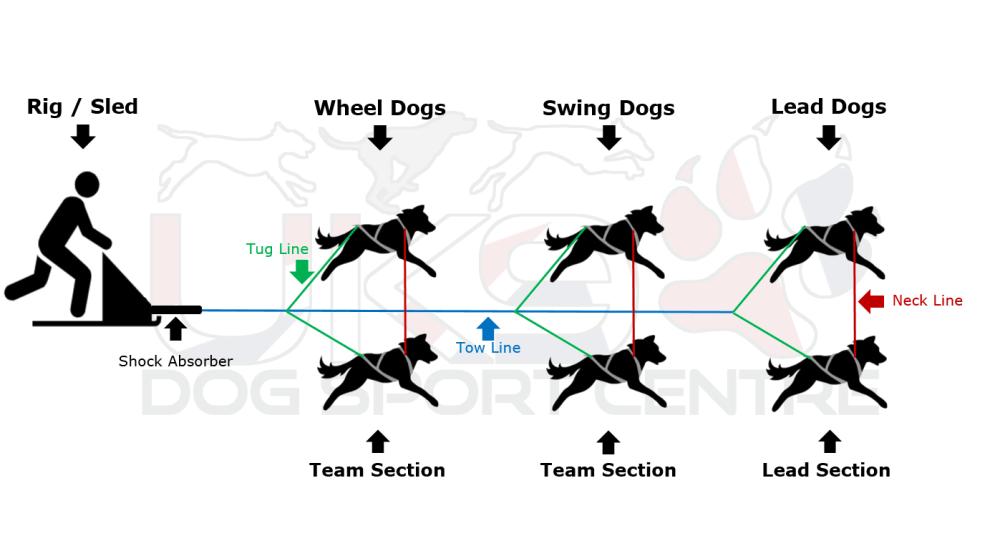 medium resolution of dog sled clipart