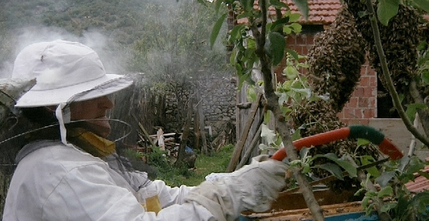 """""""Honey on Wounds"""", a film about Kosovo War women"""