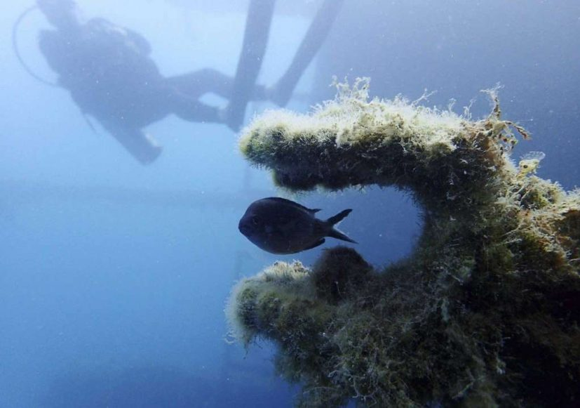 In this Tuesday, July 18, 2017 photo, a fish swims through part of the Italian World War II shipwreck MV Probitas, with Dive Safety Officer Howard Phoenix of the non-profit RPM Nautical Foundation in the background. On the seabed off the rugged shores of Albania, one of the world's least explored underwater coastlines, lies a wealth of treasures. Ancient amphorae that carried olive oil and wine; wrecks with hidden tales of heroism and treachery from two world wars; spectacular rock formations and marine life. Photo: Elena Becatoros, AP