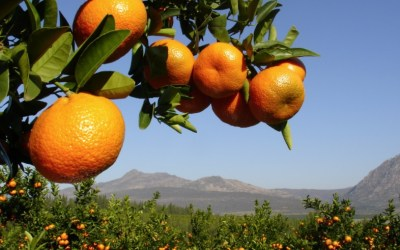 Albania among top European citrus and medical plant producers