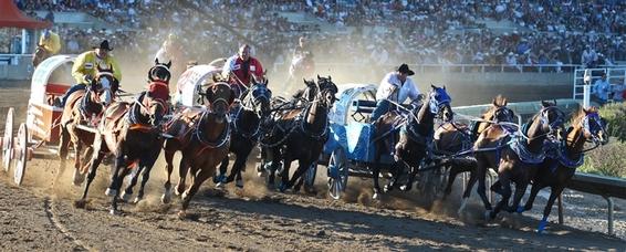 Calgary Stampede race